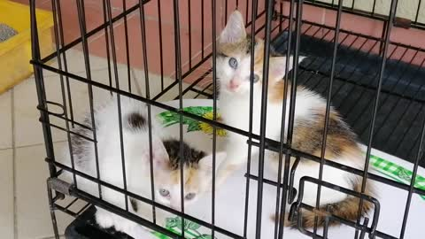 kittens in my cage