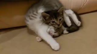 Proofs that cats are liquid. - Video
