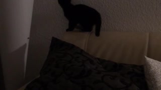 Black cat on couch tries to catch laser - Video