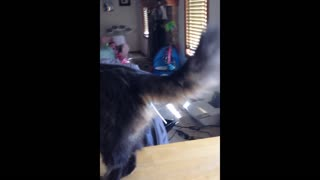 Kitty cat gets lollipop stuck on butt - Video