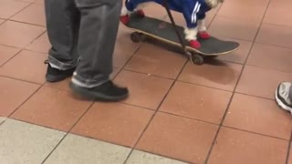 Dog blue sweater black hat on skateboard - Video