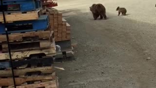 Warehouse Bear Visitors - Video