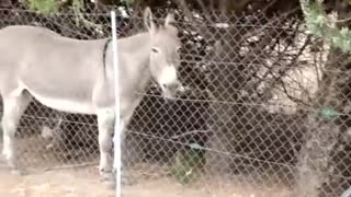 donkey sound v loadly  - Video
