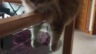 Fluffy Kitty Rests on a Banister