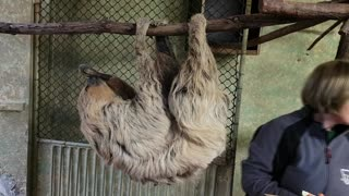 Worlds Oldest Sloth Sets Guinness World Record