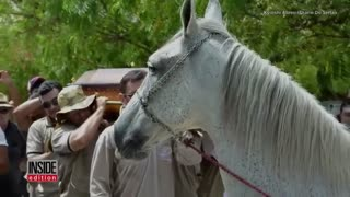 Grieving Horse Says His Last Goodbye To His Best Friend Who Died Suddenly - Video