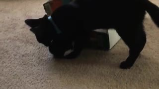 Black kitten plays fetch with jingly toy on white carpet - Video