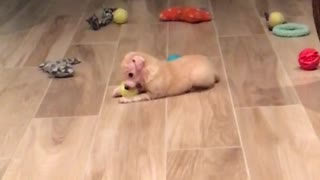 Puppy playing with ball