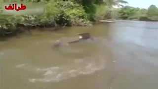 The bigest Anaconda - Video