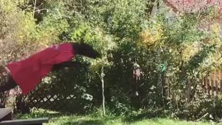 Black dog jumping with superman cape on  - Video