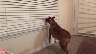Boxer with Laser
