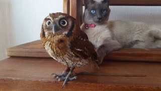 Adorable owl and cat are best friends - Video