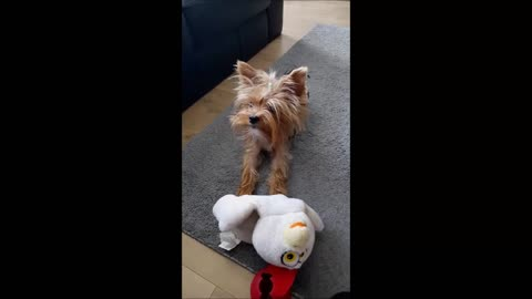 Talking puppy begs to play