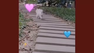 Cute little dog funny jumping