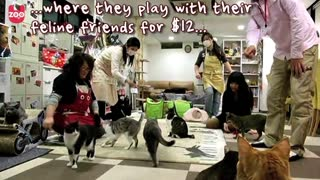 Cat Cafe - Video