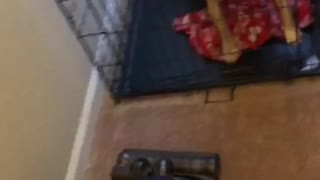 Dog Fights the Vacuum - Video