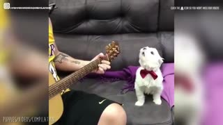 Cute dog sings to guitar with its owner