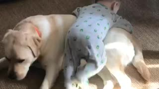 Baby uses dog as personal jungle gym - Video