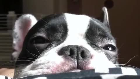 Adorable Puppy Close Up