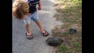 Kid picking up turtle gets a surprise - Video