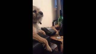 Dog Knows Owner's Had One Too Many, Stops Her From Having More - Video
