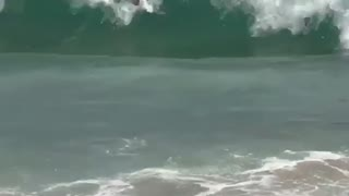 Guy swimming beach knocked by wave - Video