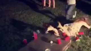 Girl in flower dress tries to dunk at beer pong table breaks - Video