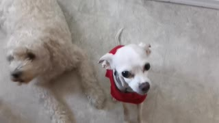 Spud and Buddy waiting for snacks