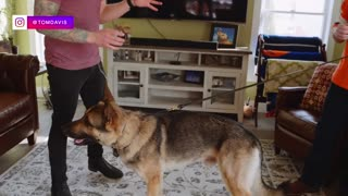 Learn How to teach your dog and cat to get along