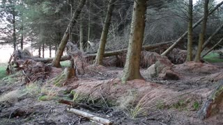 Heavy Winds Push Trees Back And Forth, Create Insane Illusion! - Video