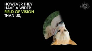 How Do Dogs See The World - Video