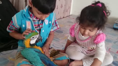 Two cute babies playing with parrot