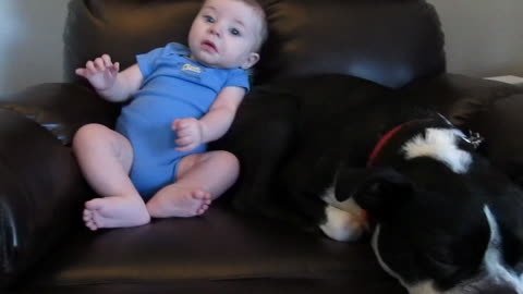 Baby Takes A Dog Completely By Surprise Releasing A Loud Fart
