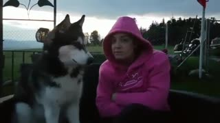 Husky flawlessly sings French song with owner