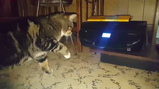 Cat attacks Picture Being Printed Long  - Video