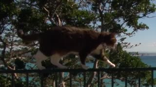 Parkour cat - Video