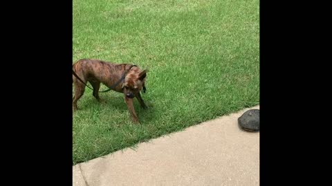 Curious pup makes a new turtle friend!