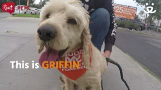 Griffin The Three-Legged Dog is Full of Happiness - Video
