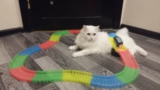 Train Track Cat - Video