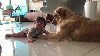 Baby girl sweetly tries to chew doggy's paw