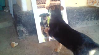 My Dog Against the Evil Mirror - Video