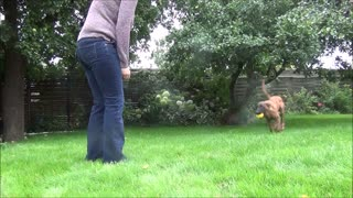 4,5 months old dog shows tricks and obedience