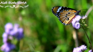 Beautiful butterfly on beautiful flowers flying slowly slowly