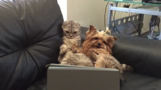 Dog and cat watch Netflix on owner's tablet