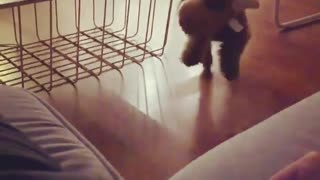 Adorable puppy fails at jumping on the couch