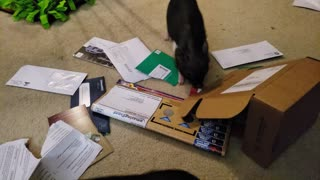 Piglets find use for their owner's junk mail