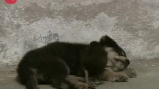 Dog Makes Friends With Duck - Video