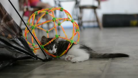 This kittens having a ball