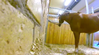 Watch What This Horse Does When His Owner Leaves The Stall….