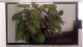 See filming of plants with effects